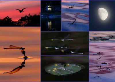 Dragonfly Collage, One Canoe Ride