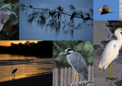 Jamaica Bird ollage