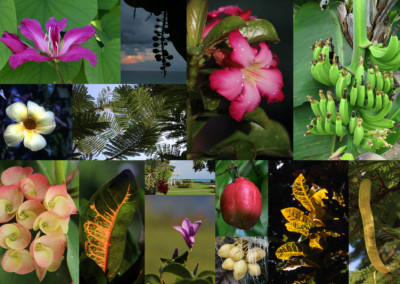 Jamaica Flower Collage