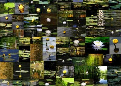 Waterlily Collage, 2018