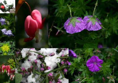 Rainy and Wintry Sad Flowers