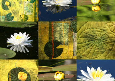 Waterlily Collage 2