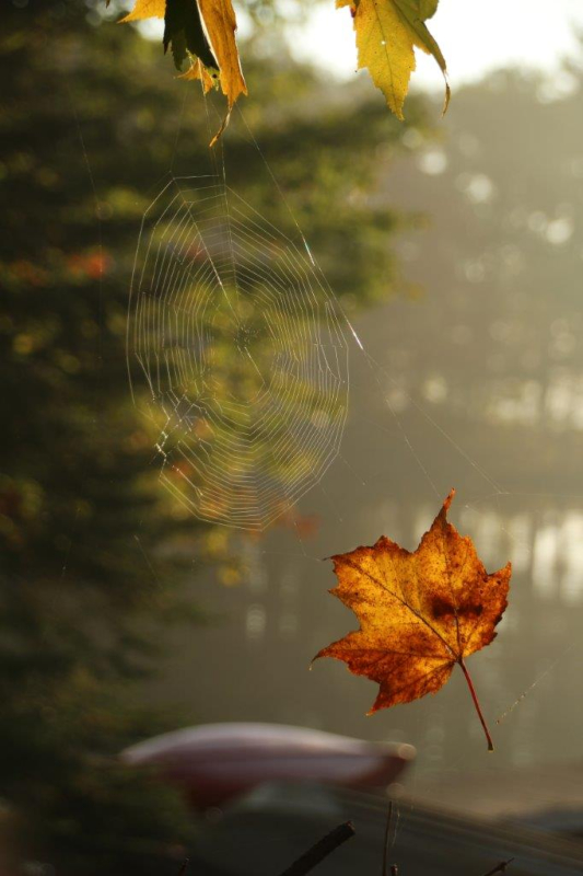 Spider web on a fall day